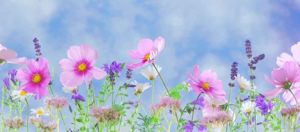 nature flowers blue summer